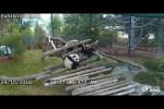Video - Auas und Hoppalas bei den Pandabären