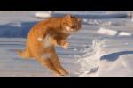 Video - Katzen sind lustig