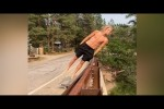 Video - LIKE A BOSS COMPILATION #192