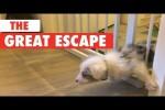 Video - The Great Escape - der große Ausbruch