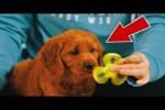 Video - 5 TIERE reagieren auf FIDGET SPINNERS