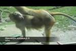 Video - FRANKEN ANIMALS 9