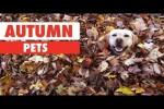 Video - Tiere im Herbst