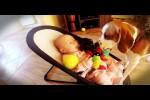 Video - Hund entschuldigt sich für Spielzeugklau
