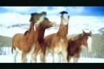Video - Pferde im Schnee - Budweiser