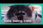 Video - Katzen können ganz schön fies sein
