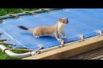 Video - Das kleine Hermelin auf dem Trampolin