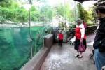Video - mit dem Otter spielen