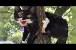 Video - Lustige Aktionen mit Hunden und Katzen