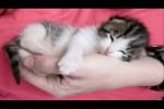 Video - Niedliche Katzen sind total müde