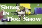 Video - Shrek in Hunde-Show