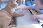 Video - Das Baby weint, wenn die Katze gehen will