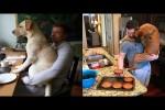 Video - Hunde sind klasse