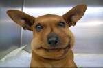 Video - Hunde und Katzen, die von einer Biene gestochen wurden