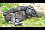 Video - Lustige Tiere