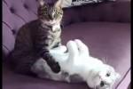 Video - Zusammenstellung lustiger Videos mit Katzen für gute Laune