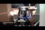 Video - FRANKEN ANIMALS 18.1