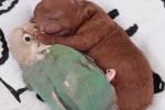 Video - Papagei und Welpe träumen