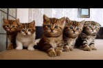 Video - Funny cats - lustige Katzen