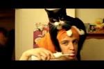 Video - Wie Katzen die Menschen ärgern
