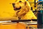 Video - Da lacht selbst der Hund