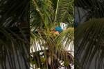 Video - Papagei mit Kokosnuss