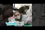 Video - Katze massiert Mitarbeiter