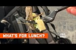 Video - What's For Lunch? Food Fails