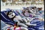 Video - Die lustige Welt der Tiere 1 (Das BESTE der Tierwelt)