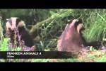Video - FRANKEN ANIMALS 4