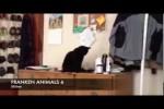 Video - FRANKEN ANIMALS 6