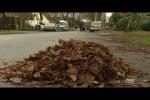 Video - Realer Irrsinn: Grabenlaub und Straßenlaub