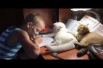 Video - Cats annoying Owners by funny and cute action