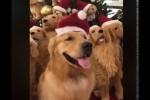 Video - Finde den echten Hund