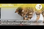Video - Katze frisst Laserpointerpunkt und muss notoperiert werden