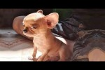 Video - Angry Pets Compilation : Funny Angry Dogs of The Week