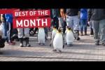 Video - Die besten Videos des Monats April 2018