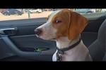 Video - Wenn Hunde zum Tierarzt müssen