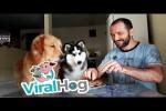 Video - Hunde werden getestet