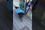 Video - Dieser Hund will unbedingt schwimmen gehen