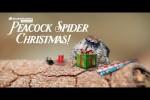 Video - Weihnachtliche Spinne