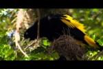 Video - Super Tieraufnahmen mit schöner Musik