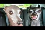 Video - Die lustigsten Hunde und Katzen