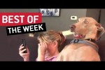 Video - Best of the Week | Houndnosis