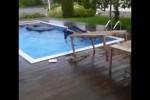 Video - Ab in den Pool