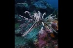 Video - Dancing with crinoids