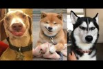 Video - Lustige Hunde