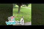 Video - Pygmäenziege versucht, das Frauchen davon abzuhalten, das Haus zu verlassen