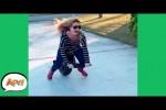 Video - lauter witzige Szenen