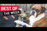 Video - Best Videos Compilation der dritten November-Woche